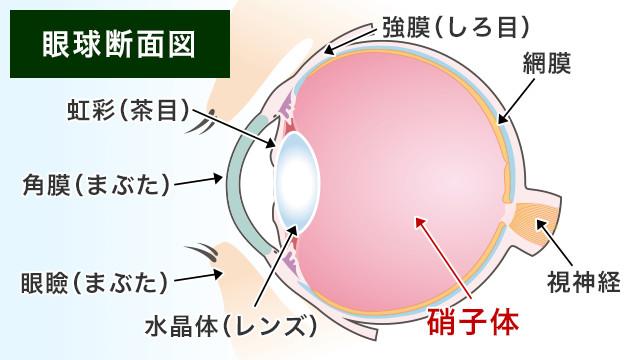 【画像】眼球断面図