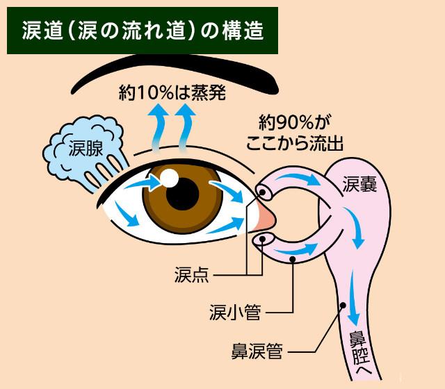 【画像】涙道(涙の流れ道)の構造